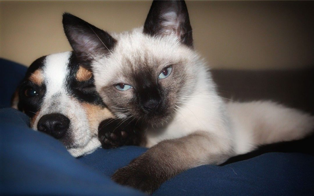 Kristina Calu – Macska boldogság