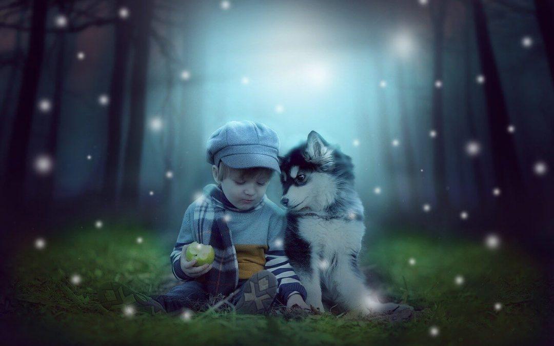 Kristina Calu – Kutyák